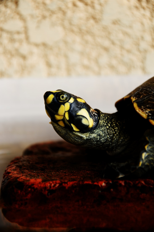 macro shot of green and yellow turtle