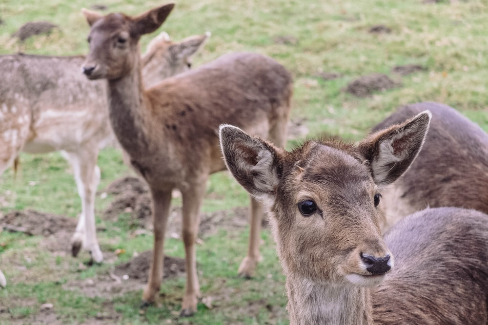 four brown deers during daytime