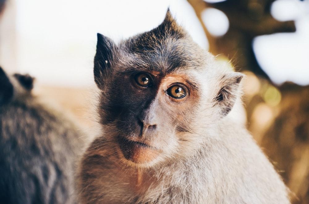 tilt shift lens photography of monkey