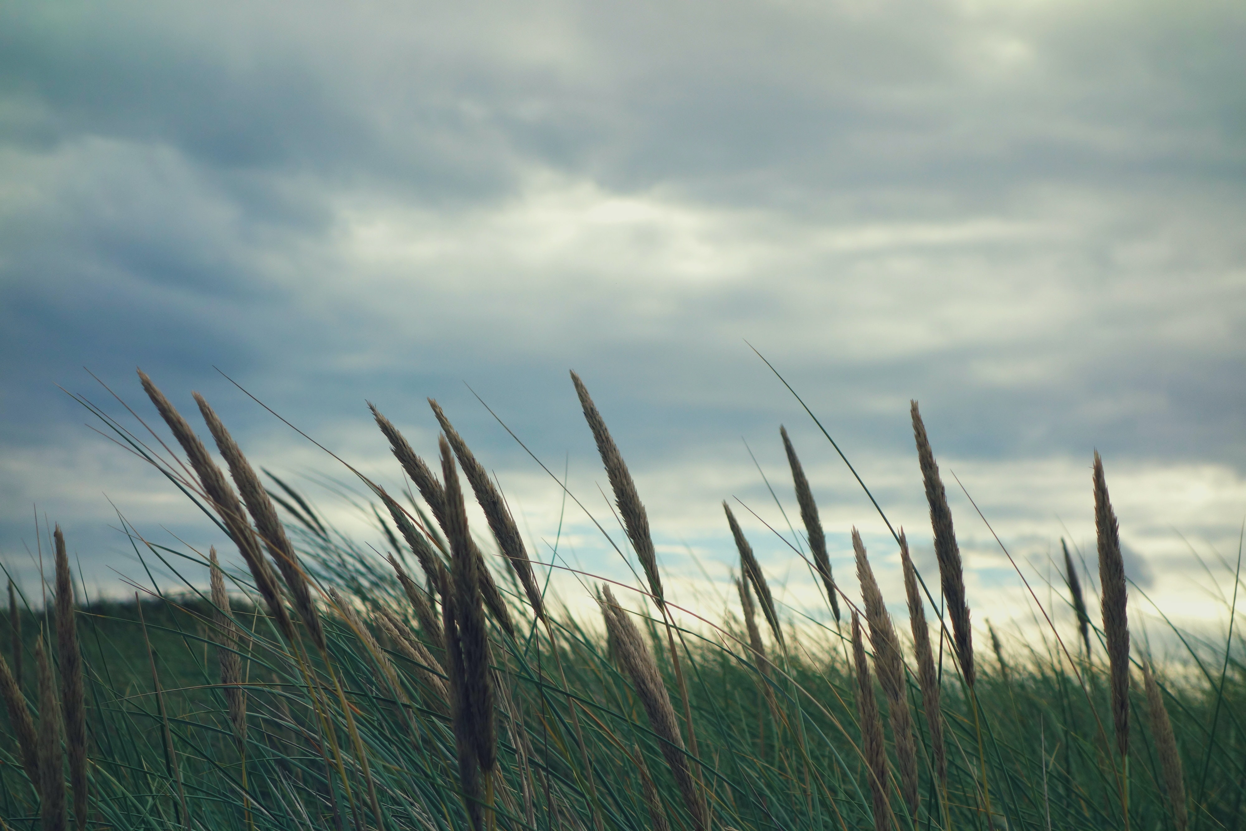 A field of grass on a cloudy day
