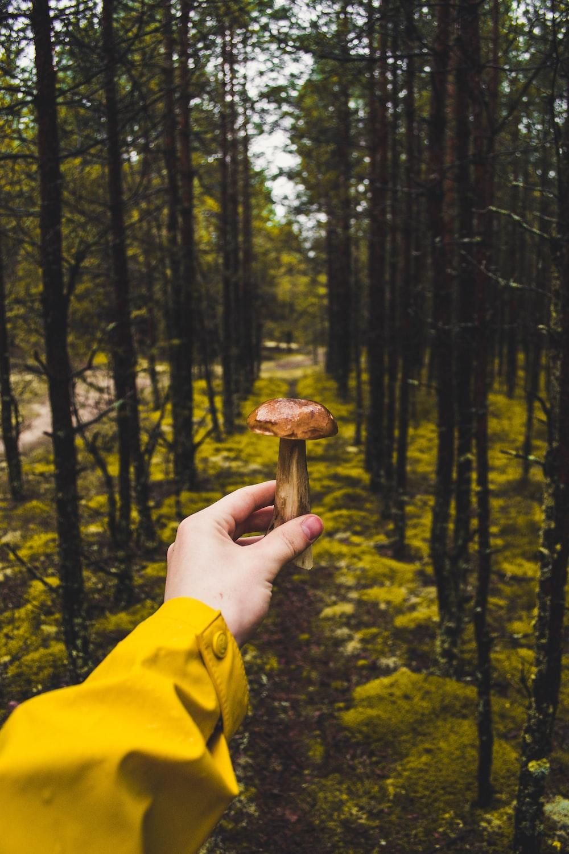person holding brown mushroom