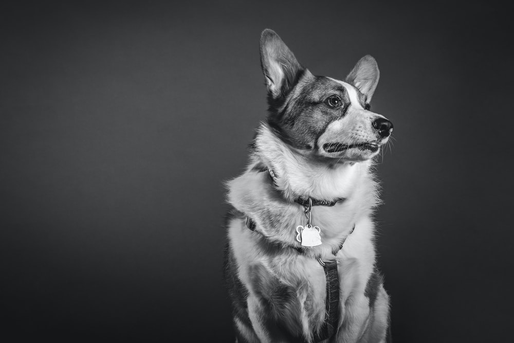 grayscale photo of dog facing right direction