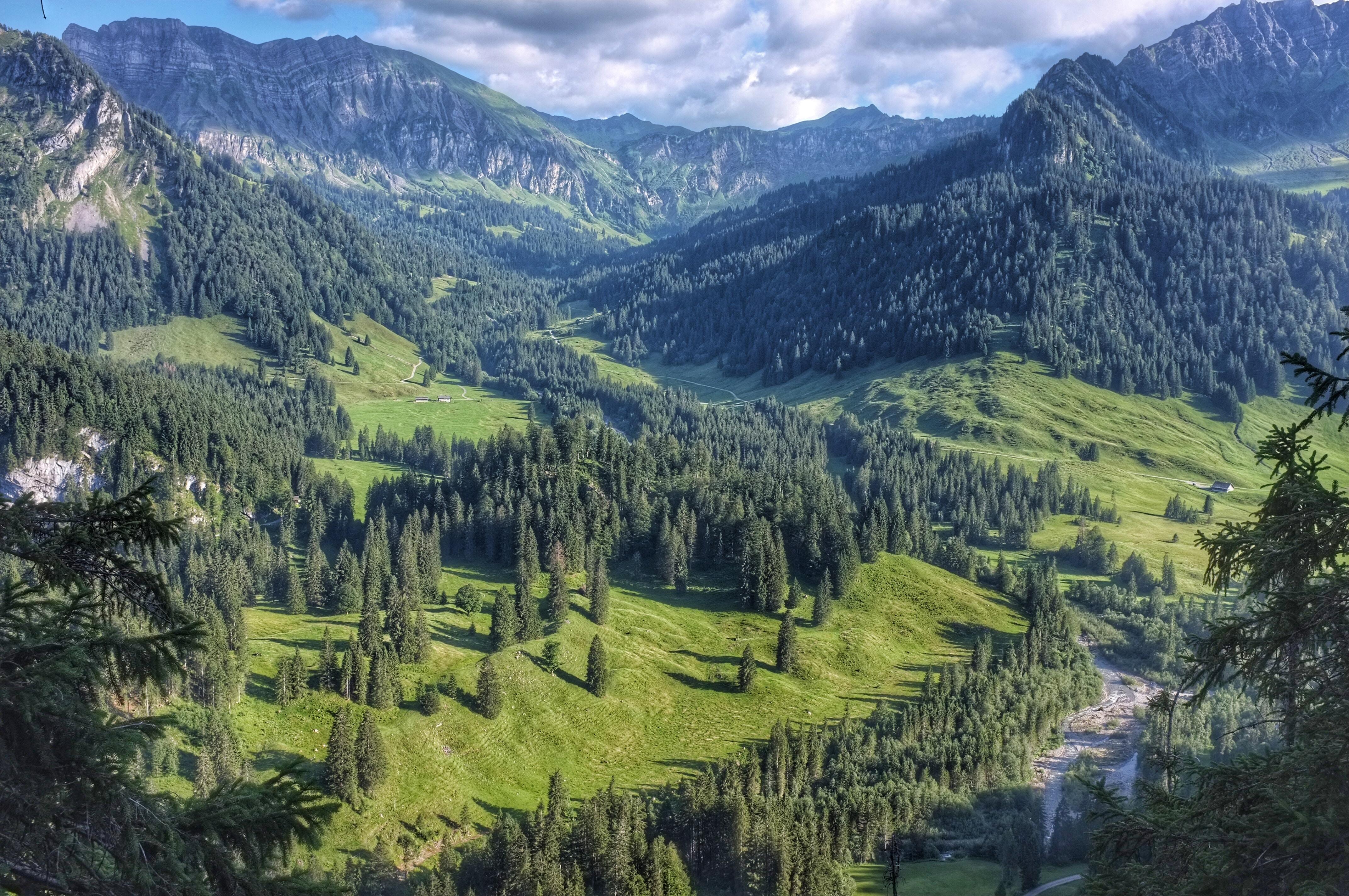 A wooded mountain valley in Schönenbach