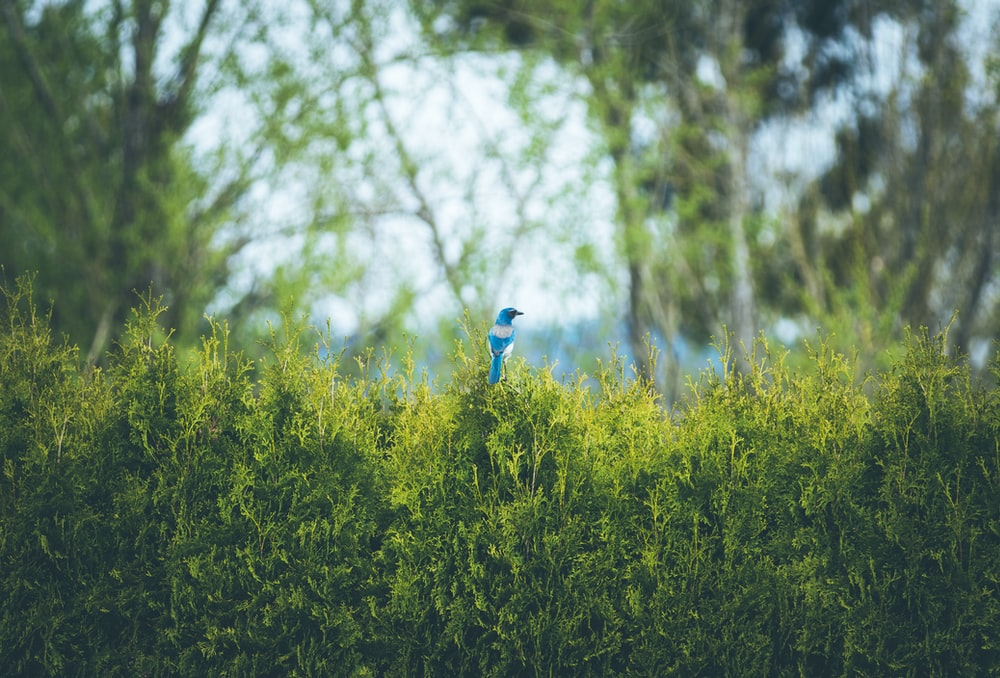blue bird perched on plant during daytime