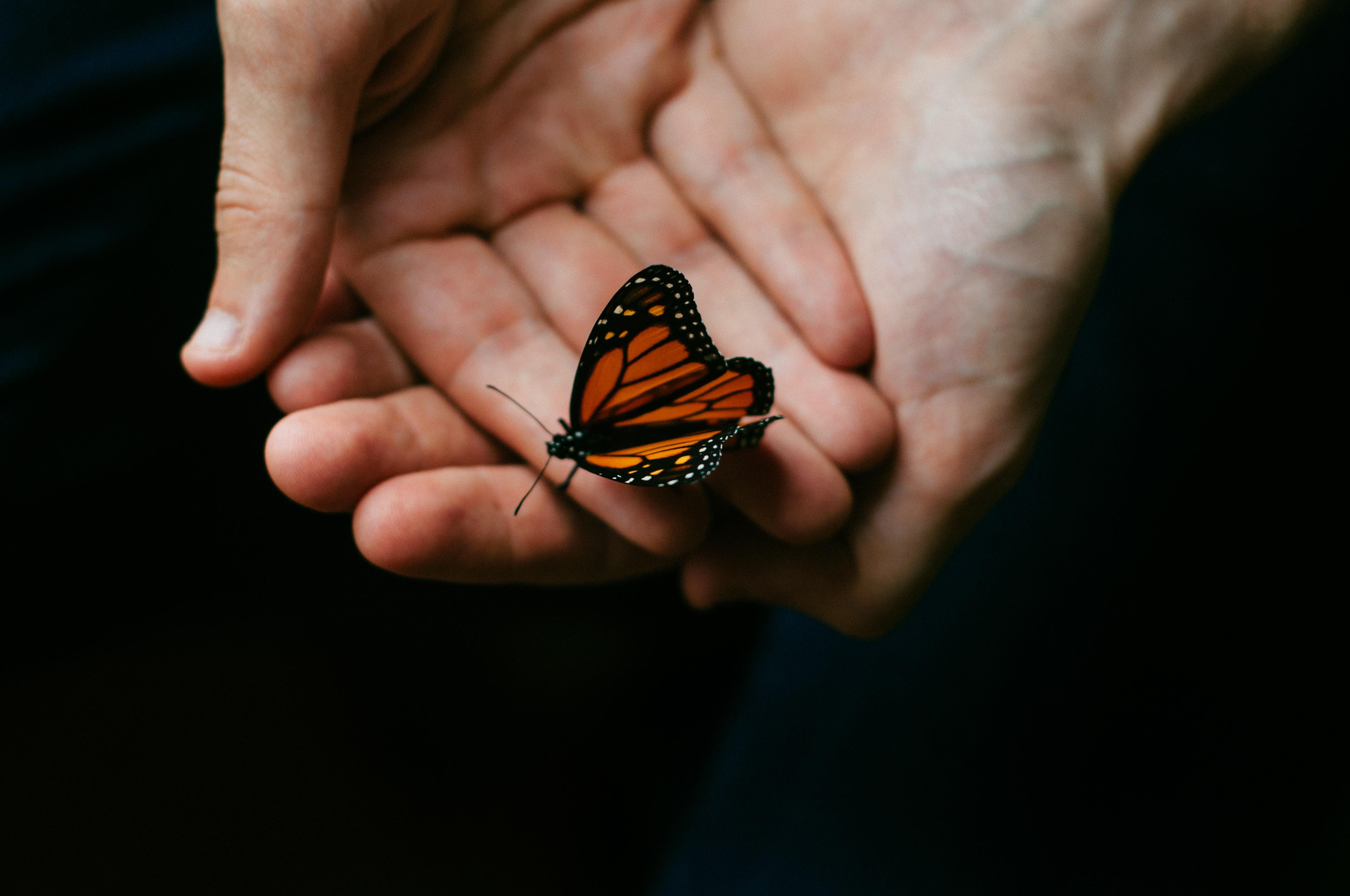 Sweet Sweet Butterfly butterfly stories