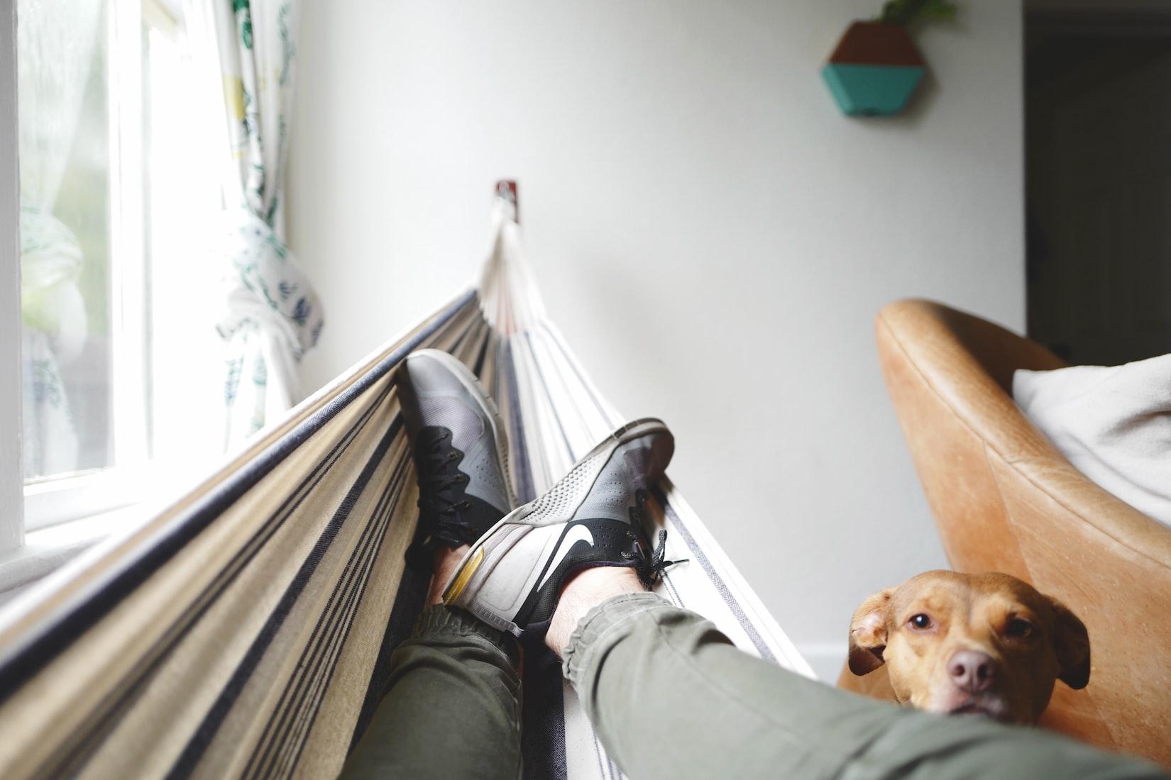 Pies sobre una hamaca interior y un perro mirando