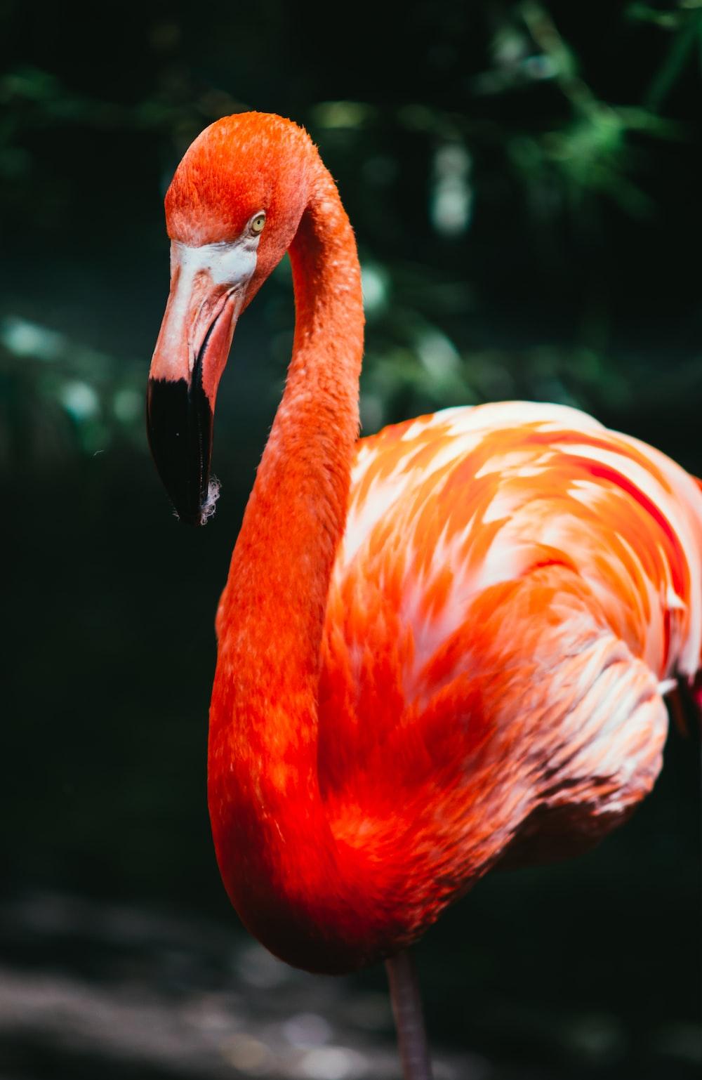 flamingo in macro shot photography
