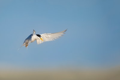 white and black bird on flight