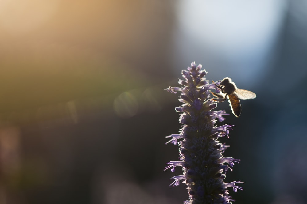 closeup photo of wing insect perching on flower