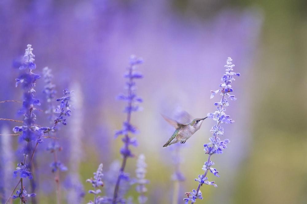 closeup photo of bird beside purple petal flowers