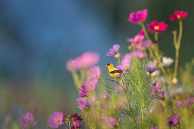 yellow and black bird on flower flowers zoom background