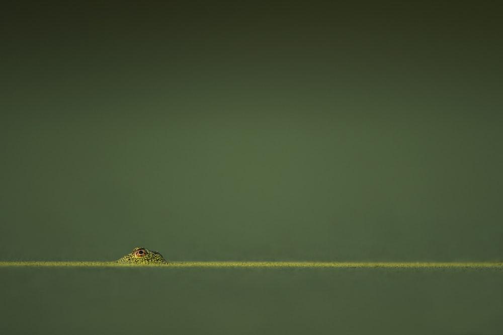 green amphibian in green water