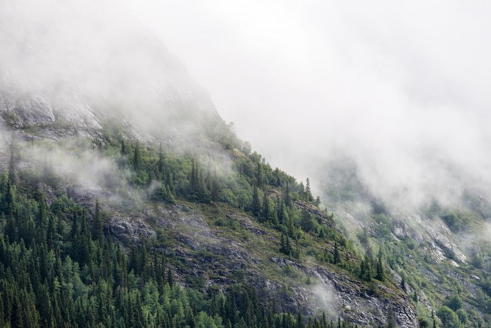 green pine trees on mountain under fog