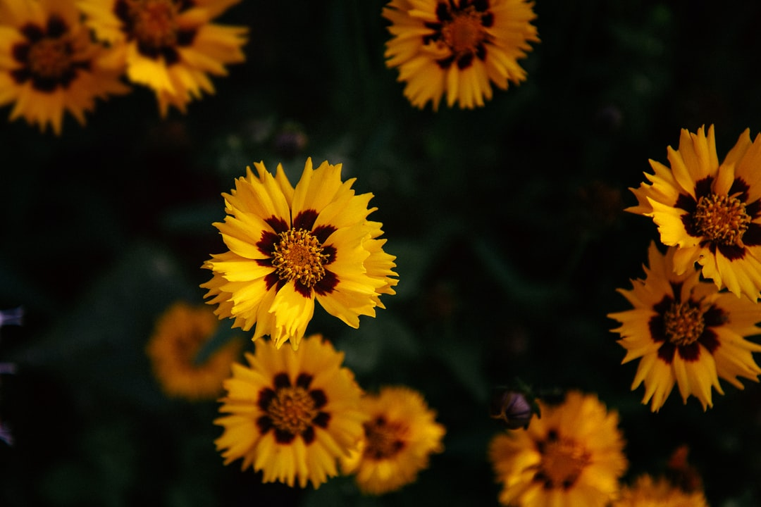 Yellow flowers from above