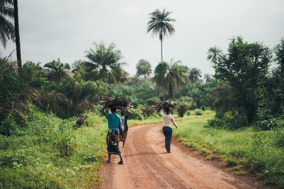 Sierra Leone firewood