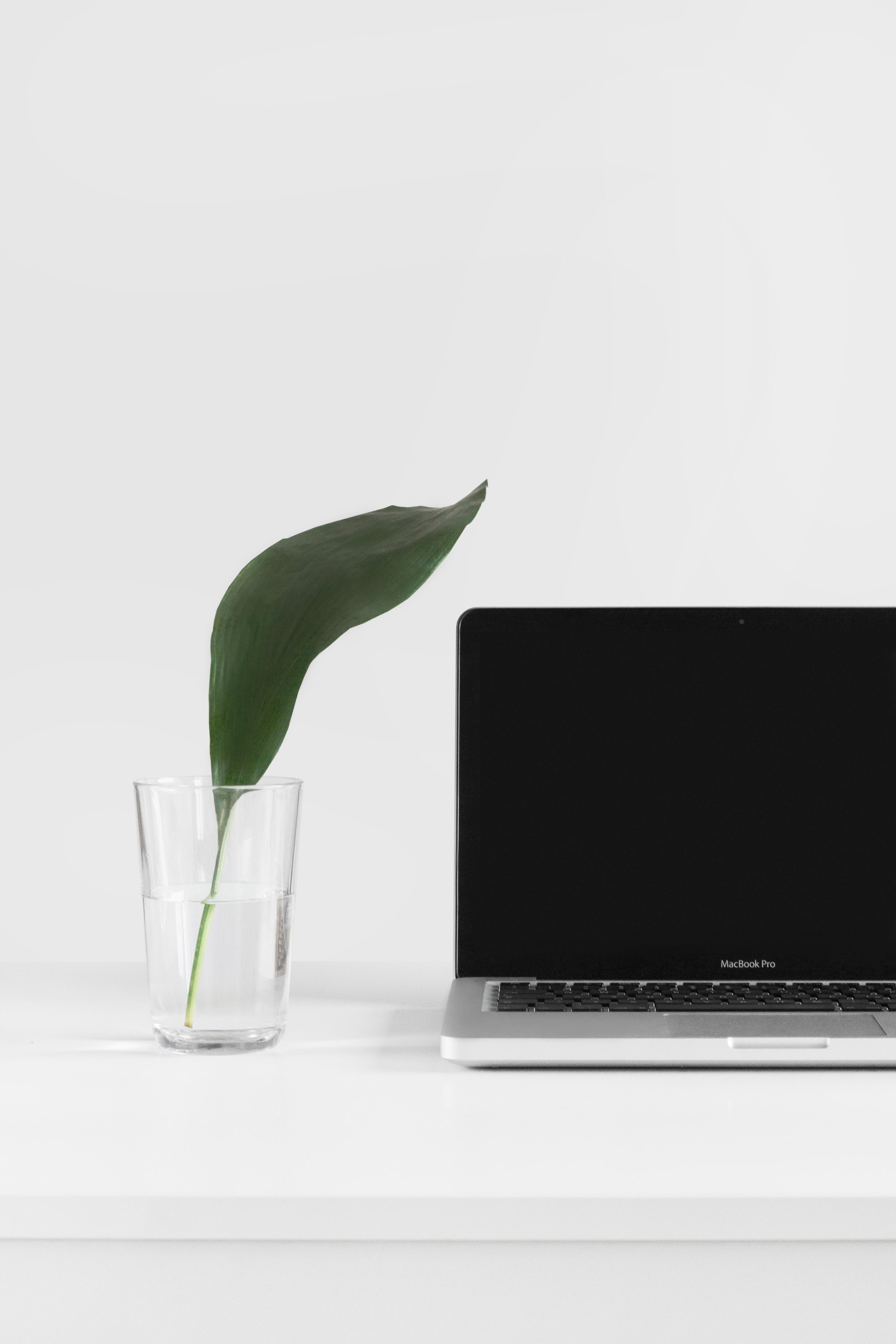 Fresh leaf near a MacBook