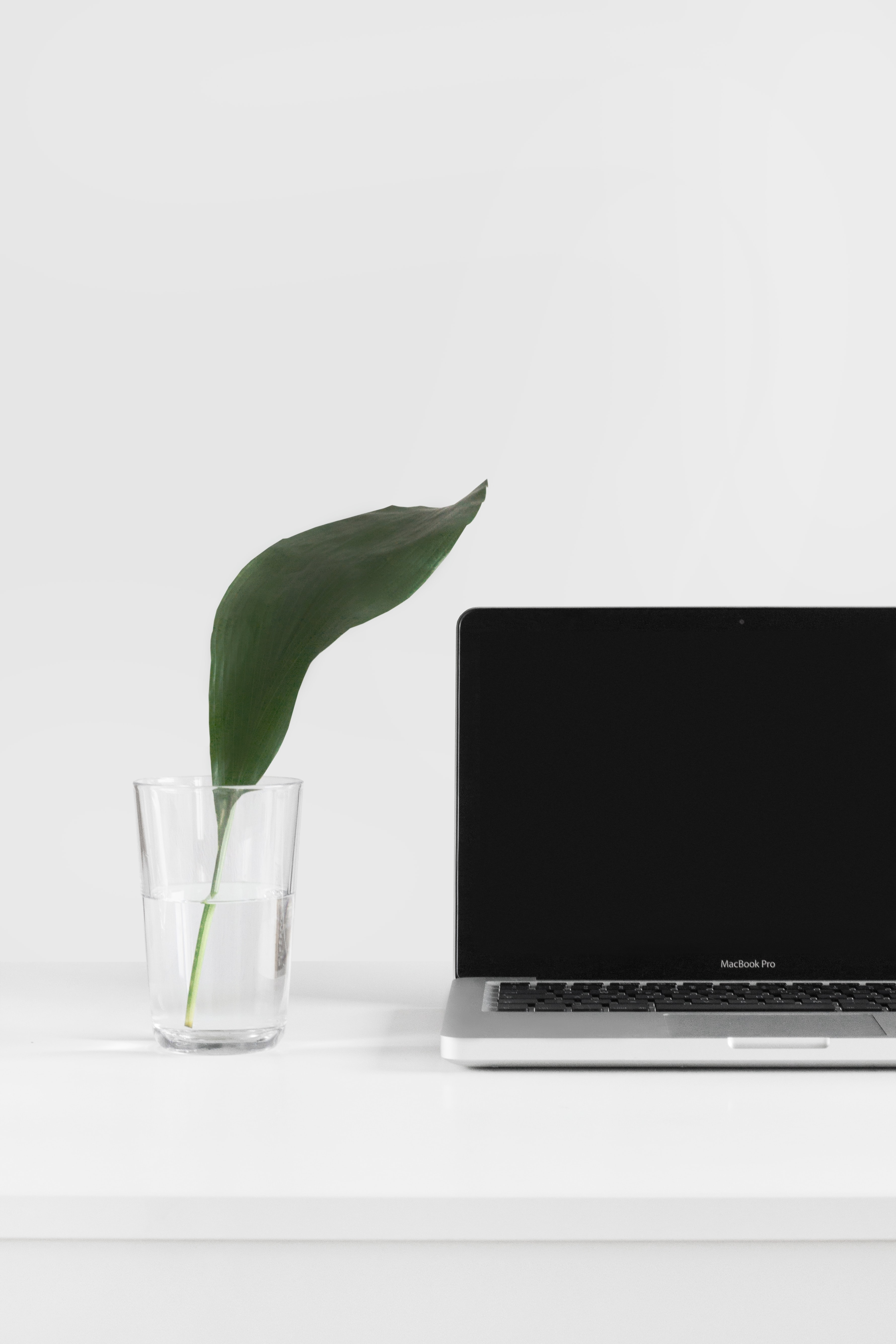 A green leaf in a glass of water next to a MacBook