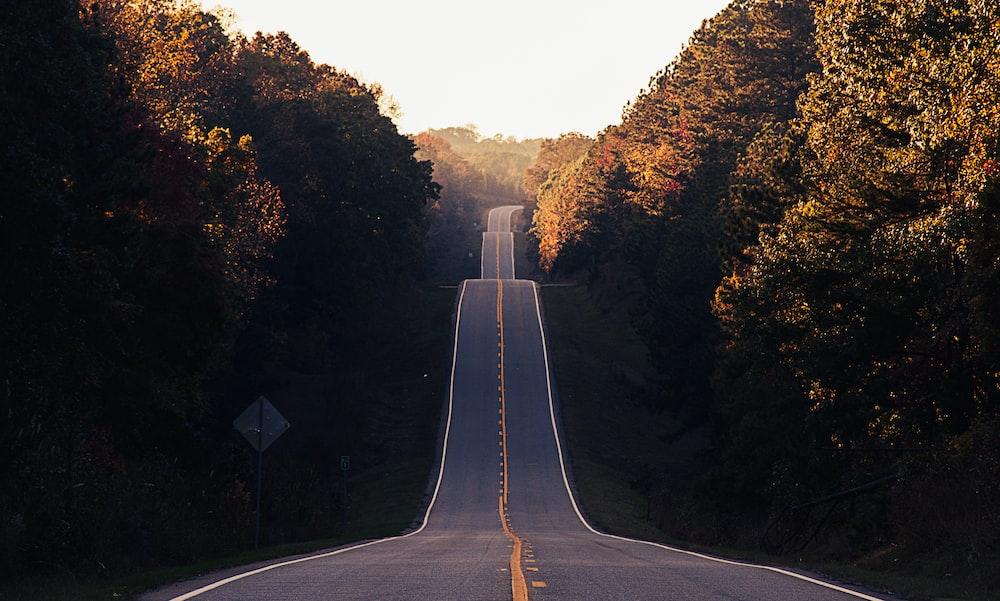 asphalt road between trees