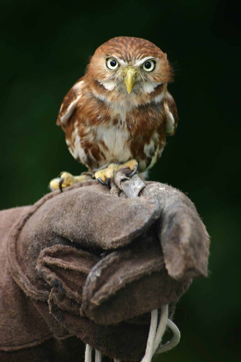 close shot of brown and white owl