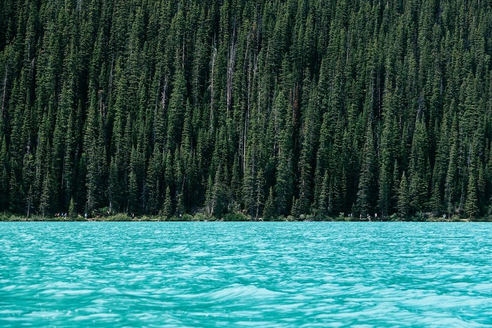 lake beside green pine trees