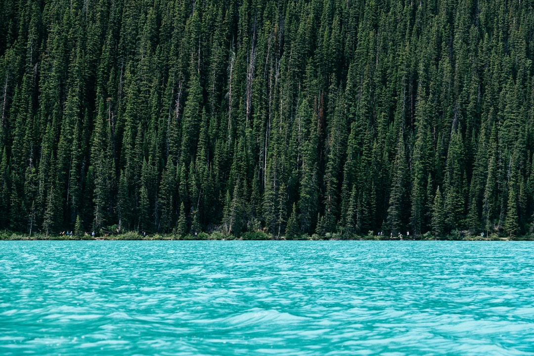 Forest near a turquoise lake