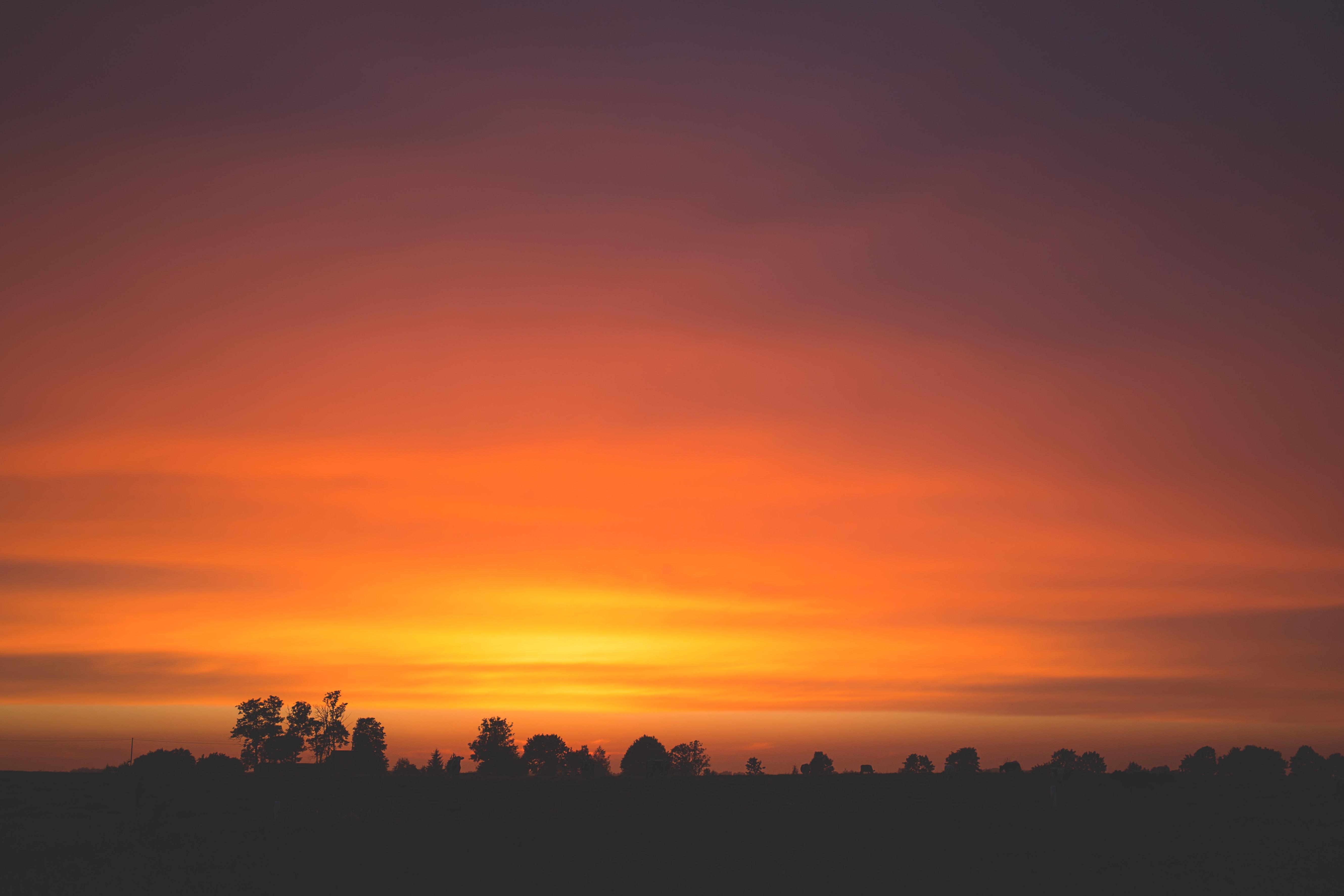 Dark silhouettes of trees against the twilight skies
