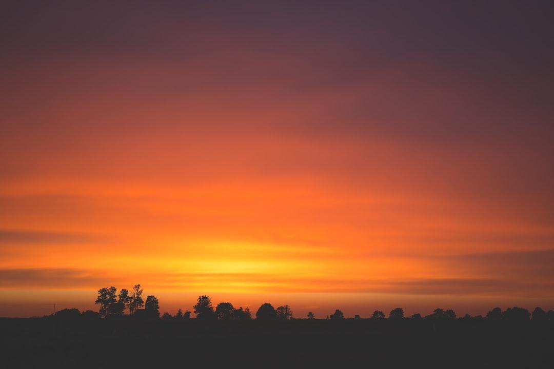 Tree silhouettes against orange sky