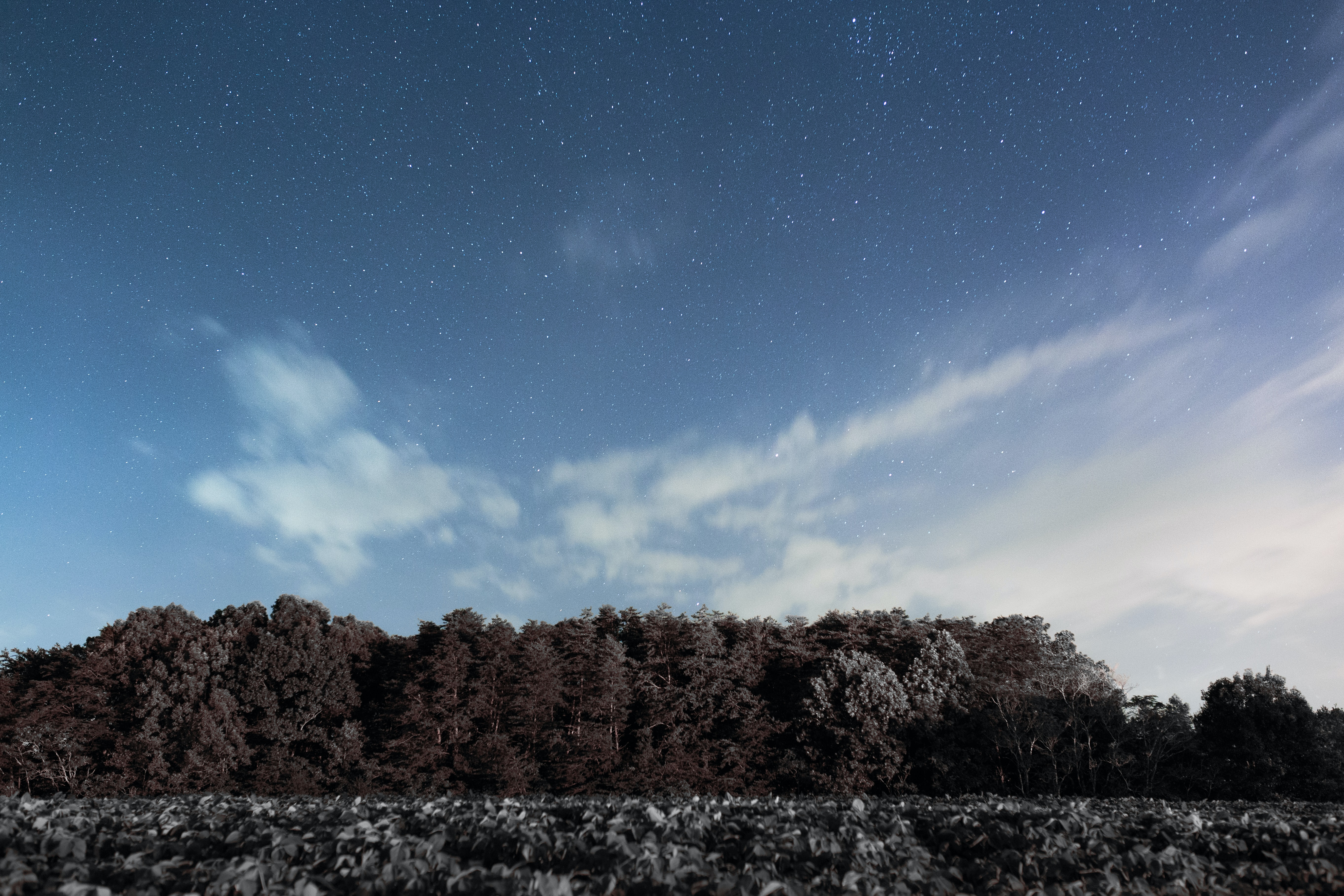 Clouds on a starry sky over a treeline in Hanging Rock State Park