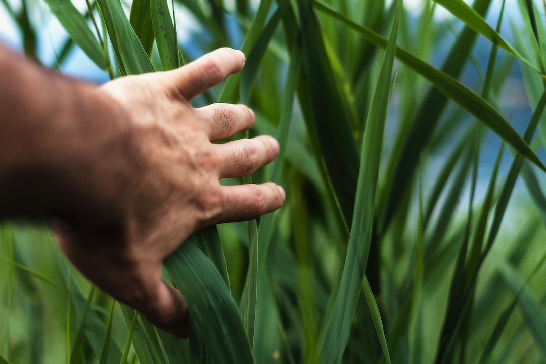 Écologie, prenez la main !