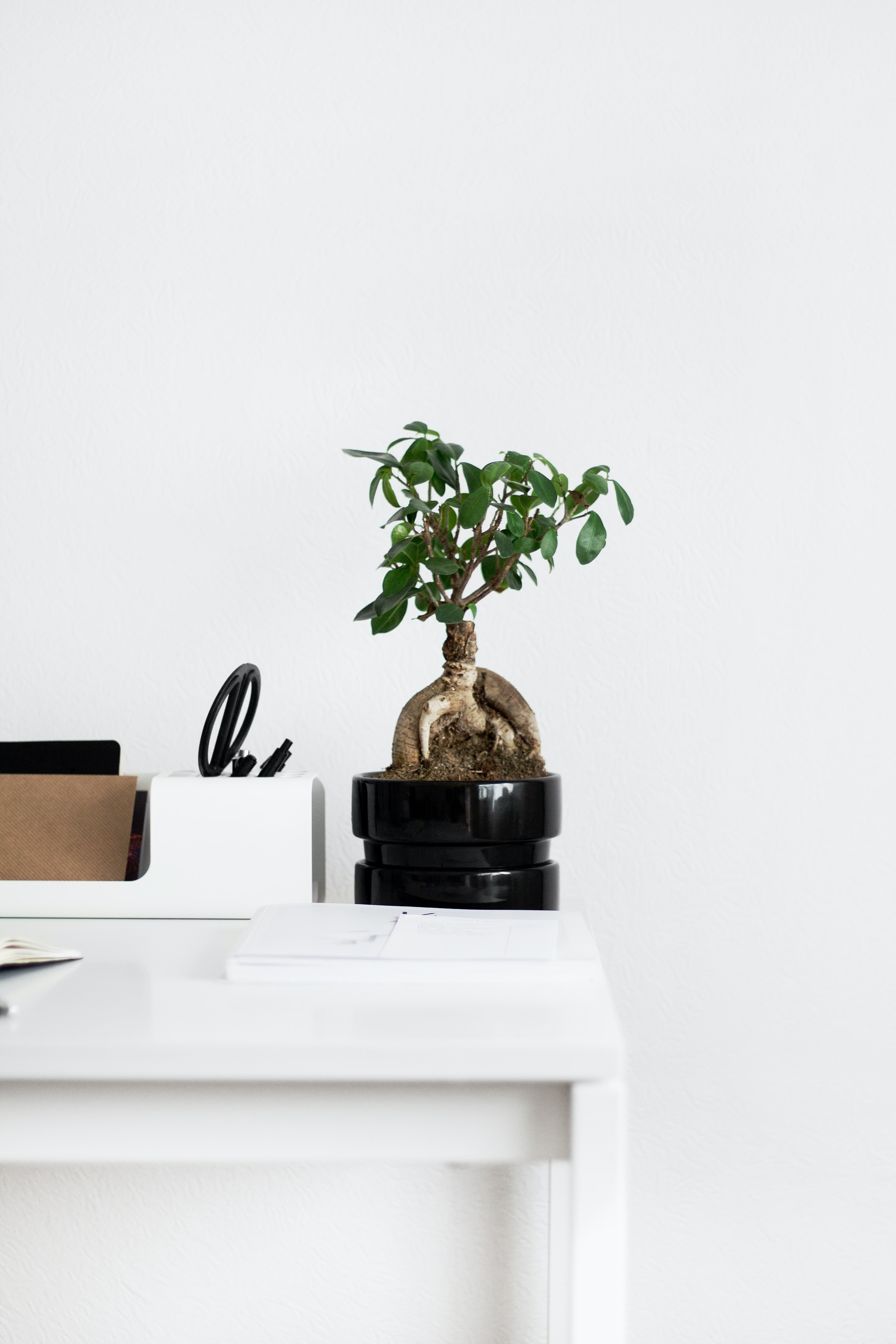 A small bonsai tree in a black flowerpot on a white table