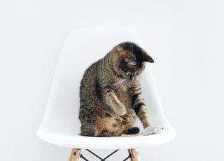 brown tabby cat sitting on bar stool