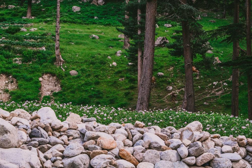 rock fragments near tall tress
