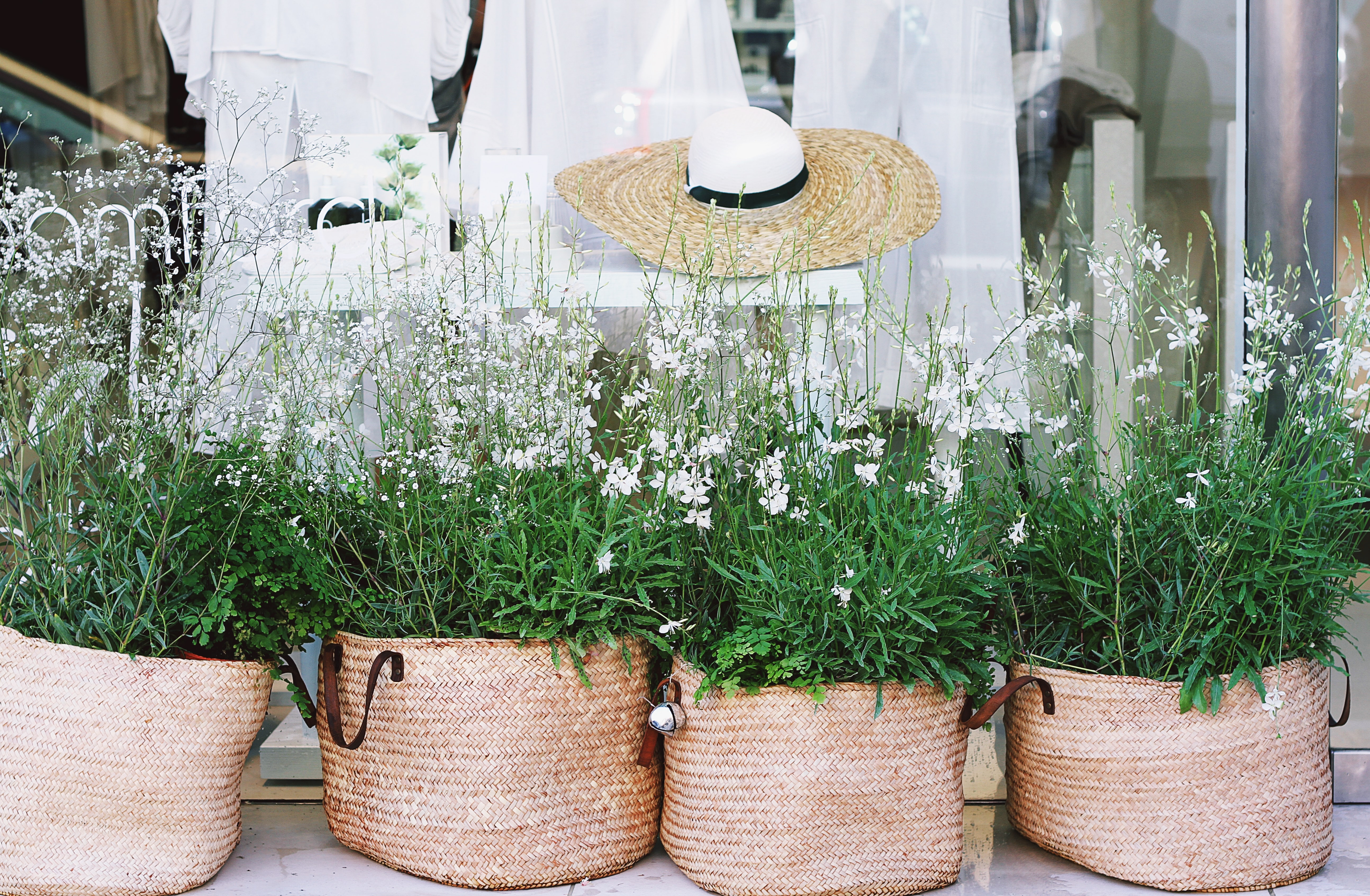 Small white flowers with rich green leaves planted in wicker bags