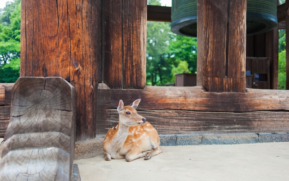 brown deer lying on ground near brown wooden post