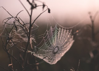 macro shot of spider web