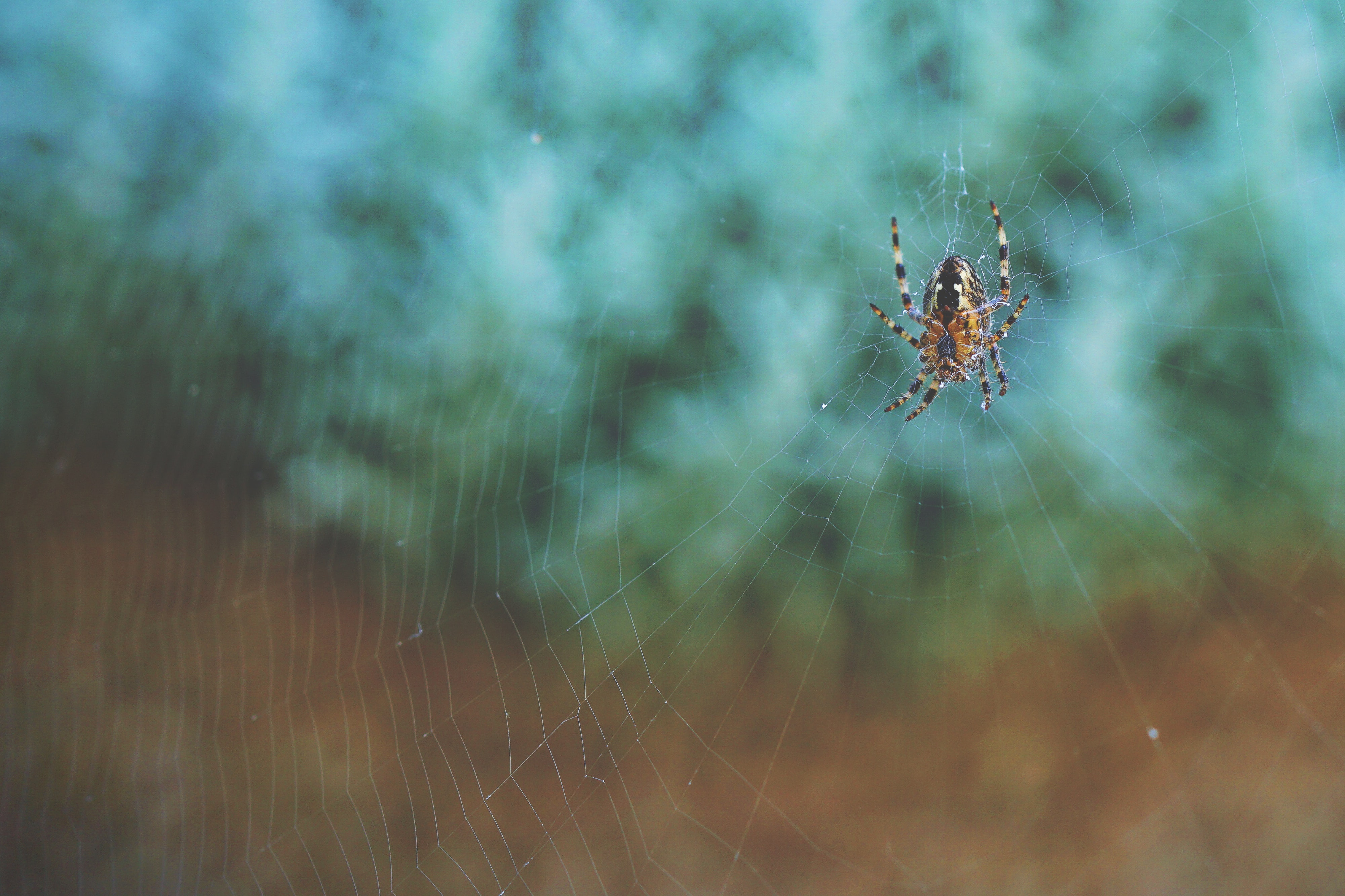 A macro view of a spider on a spider web