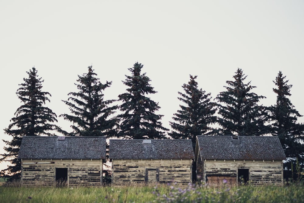 landscape photo of houses in front of pine trees during daytime