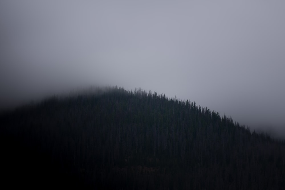 fog covered mountain