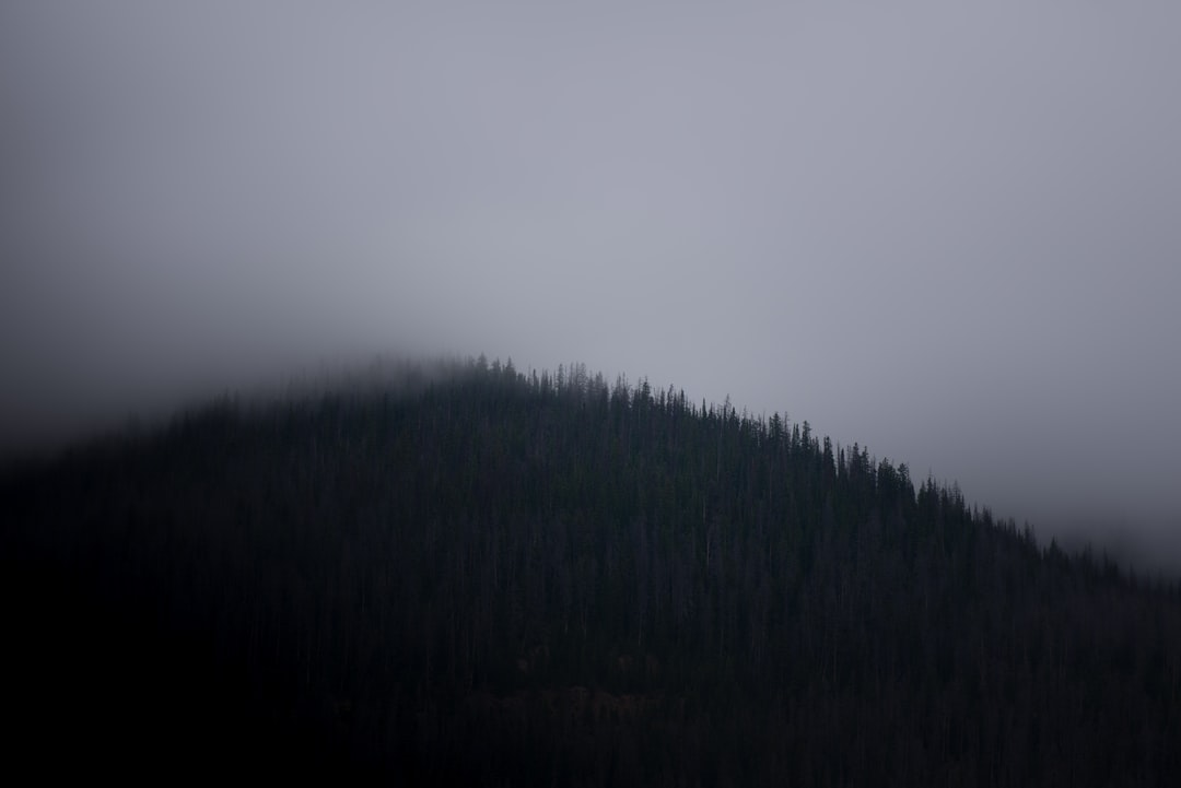 Forest under gray sky