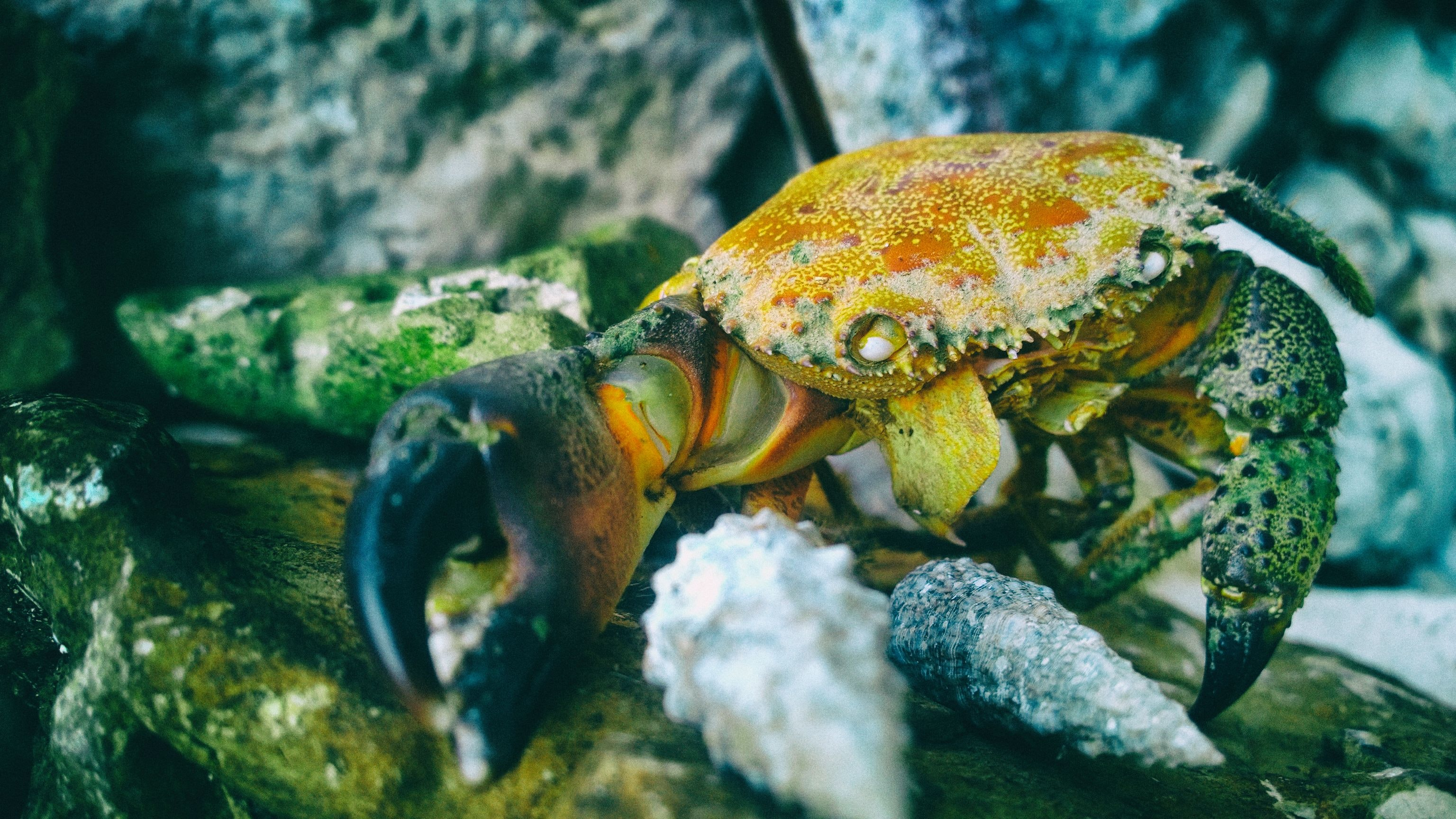 orange and black crab in macro shot phogoraphy