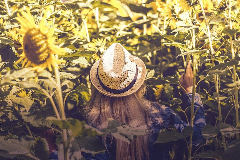 person wearing white hat beside sunflower fields