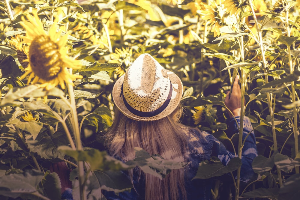 person wearing white hat beside sunflower fields