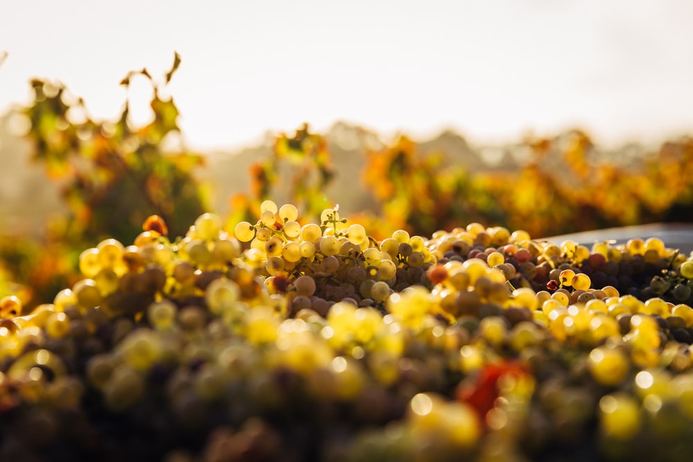 macro shot of seaweeds