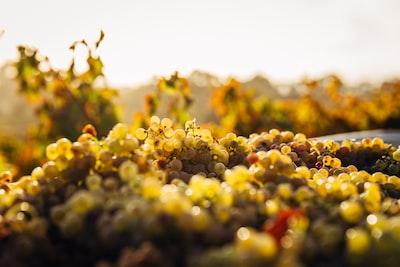 4679. Bor,szőlő, borászatok