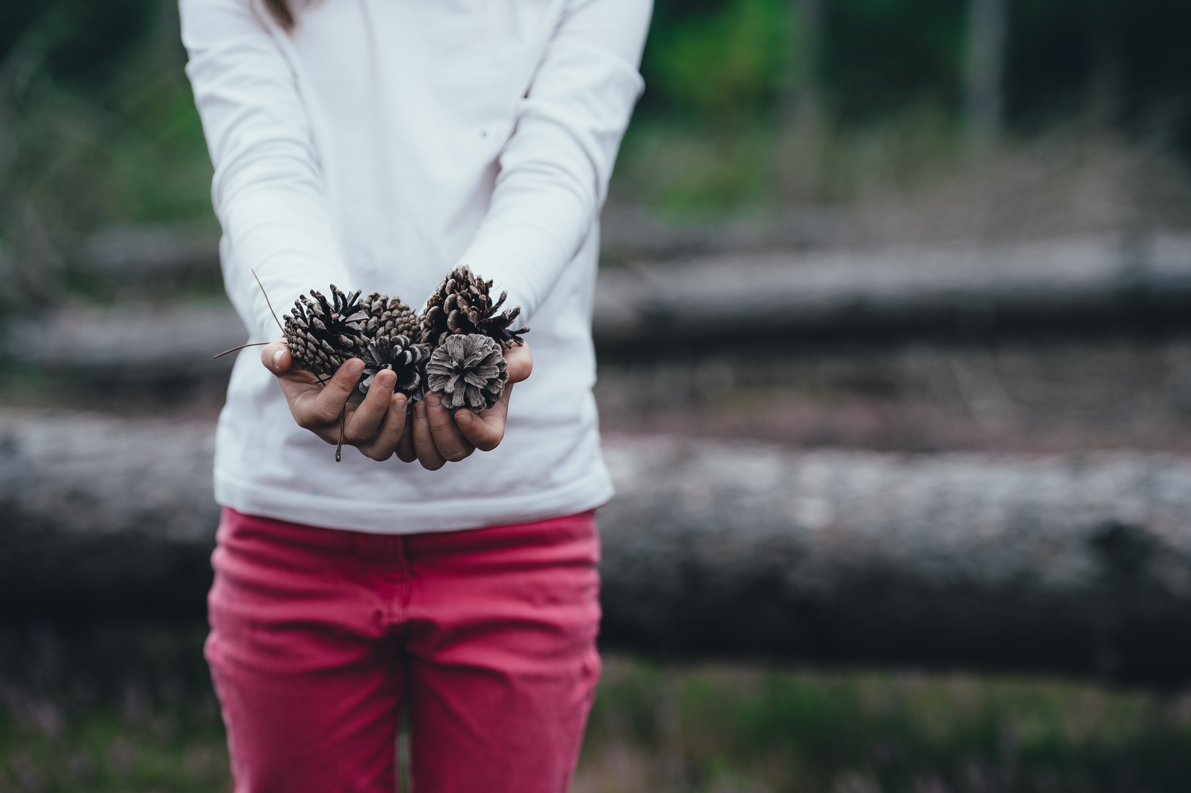 woman holding brown pinecones