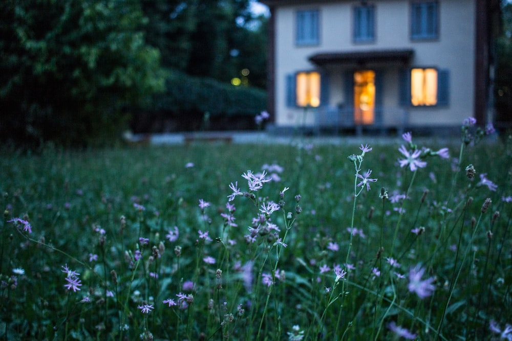 A patch of grass with white wild flowers in a suburban backyard