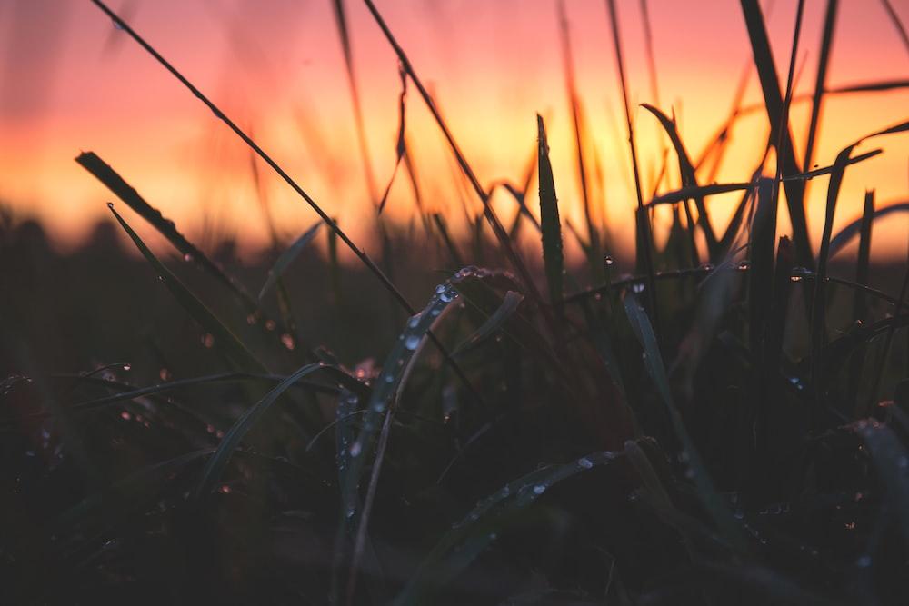 close shot of grass