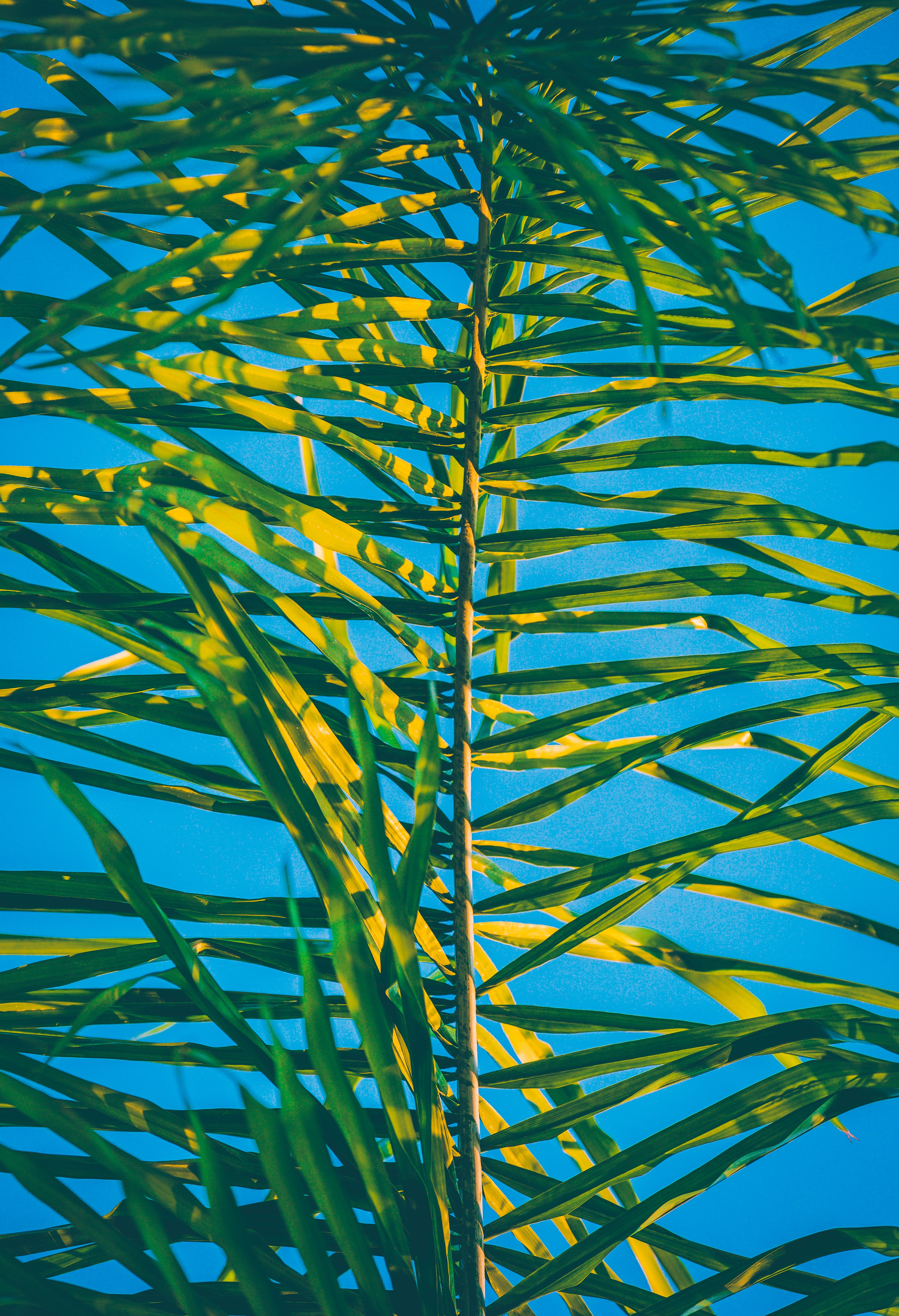 green palm tree leaf at daytime