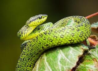 green and black snake on green leaf