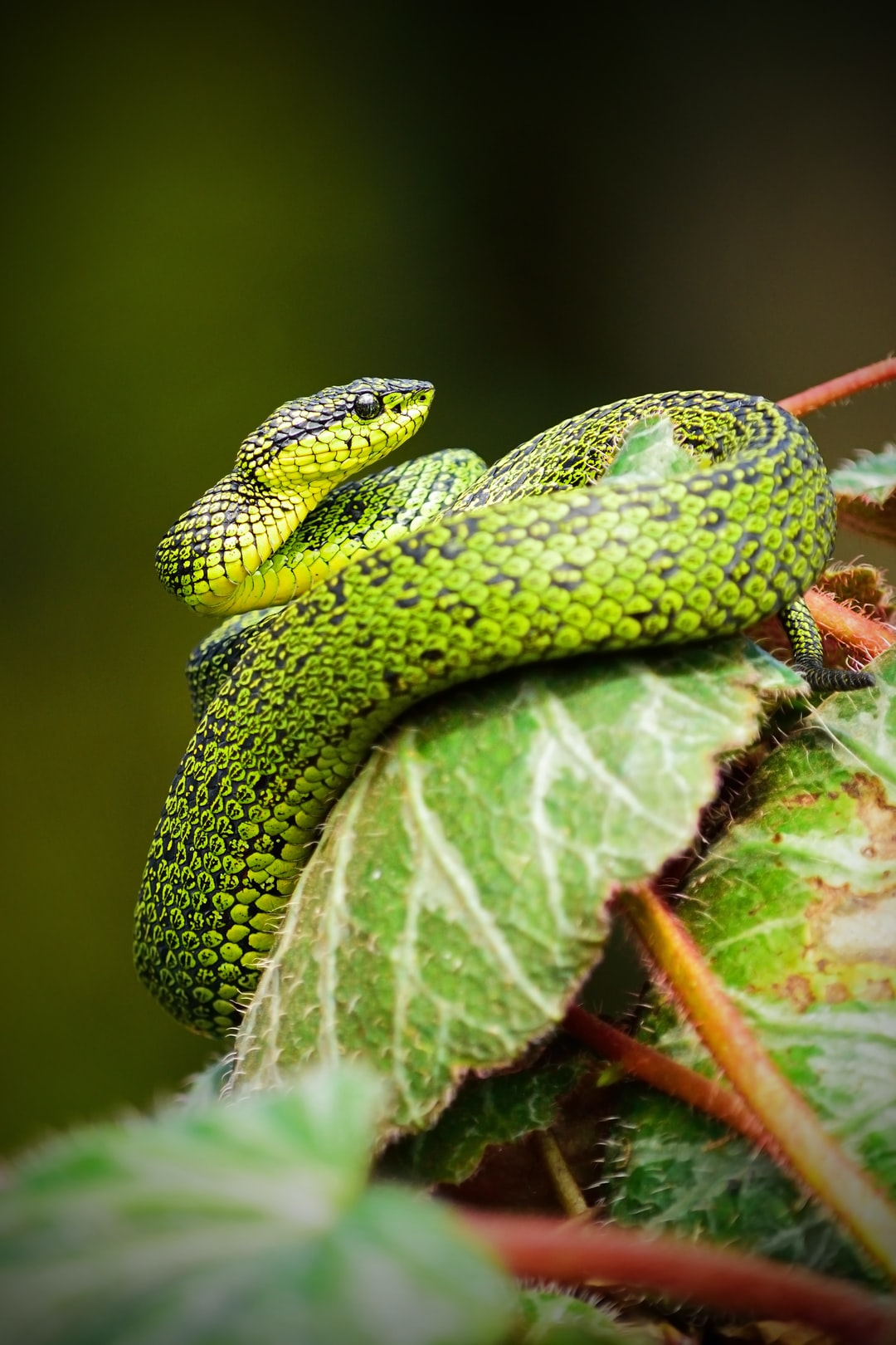 A green snake coiling a leaf